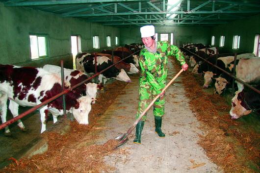 品种牛销售