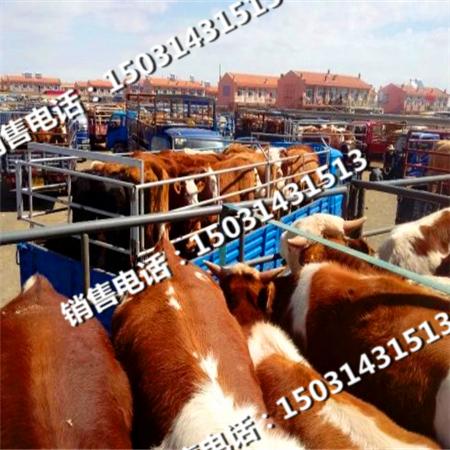 张北县牲畜市场