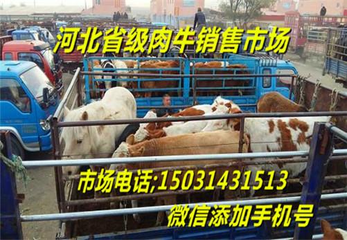 肉牛犊市场